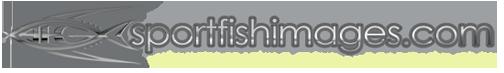 www.sportfishimages.com