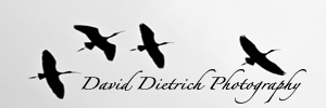 David Dietrich Photography