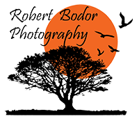 Robert Bodor Photography