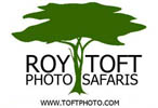 Roy Toft Photo Safaris & Gallery
