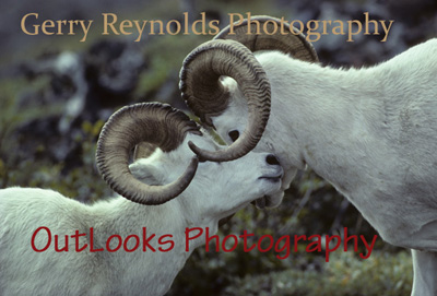 Gerry Reynolds - OutLooks Photography