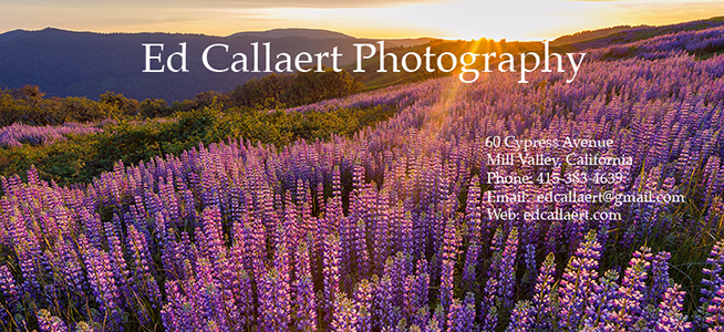 Ed Callaert Photography