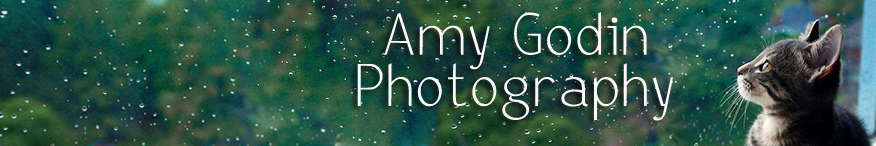 Amy Godin Photography