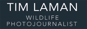 Wildlife Photo Archive-Tim Laman