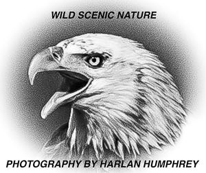 Harlan Humphrey
