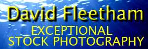David Fleetham Underwater Photography