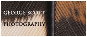 George Scott Photography