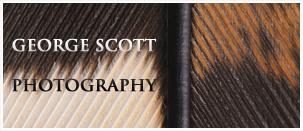 George Scott Photography