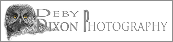 Deby Dixon Photography