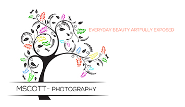MScott-Photography
