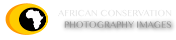 African Conservation Photography Images