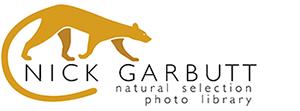 Nick Garbutt