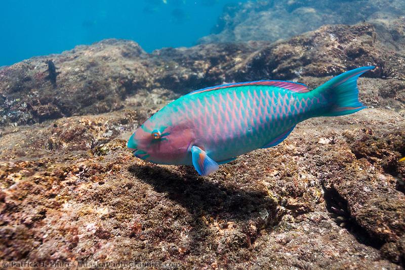 Galapagos islands ecuador for Fishing in ecuador