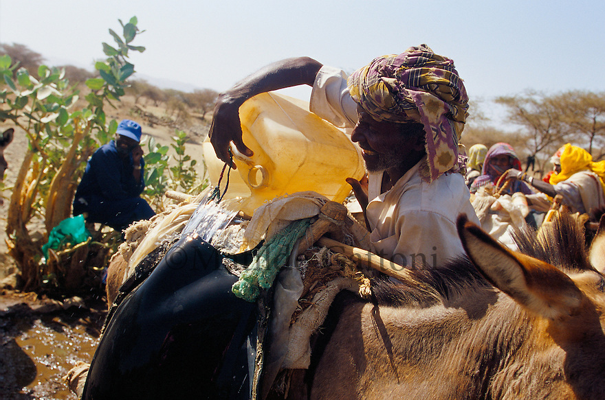 Eritrea - Gash Barka - Old man pouring water in his donkey's containers. As a result of 30 years of war for independence against Ethiopia (from 1961 to 1991) and another 3 years from 1997 to 2000, there are 50,000 Eritreans currently living in internally displaced (IDP) camps throughout the country. These IDPs have fled three times in the last 10 years, each time because of renewed military conflict. They lived in relatives' homes when lucky enough, but mostly, the fled to the mountains, where they attempted to do what Eritreans do best, survive. Currently there is no Ethiopian occupation in Eritrea, but landmines prevent the IDPs from finally going home. .It is estimated that every Eritrean family lost two or three members to the war which makes the reality of the current emergency situation even more painful for Eritreans worldwide. Currently, the male population has been decreased dramatically, affecting the most fundamental socio-economic systems in the country. Among the refugee population, an overwhelming majority of families are female-headed, severely affecting agricultural production. For, IDPs in particular, 80% of households are female-headed..The unresolved border dispute with Ethiopia remains the most important drawback to Eritrea's socio-economic development, as national resources (human and material) continue to be prioritized for national defense. Eritrea is vulnerable to recurrent droughts and variable weather conditions with potentially negative effects on the 80 percent of the population that depend on agriculture and pastoralism as main sources of livelihood. The situation has been exacerbated by the unresolved border dispute, resulting in economic stagnation, lack of food security and increased susceptibility of the population to various ailments including communicable diseases and malnutrition. .