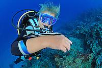 Echeneis naucrates, Gestreifter Schiffshalter auf Arm von Taucherin, Live sharksucker on arm of scuba diver,  Pemuteran, Bali, Indonesien, Asien, Indopazifik, Indonesia, Indo-Pacific Ocean, Asia
