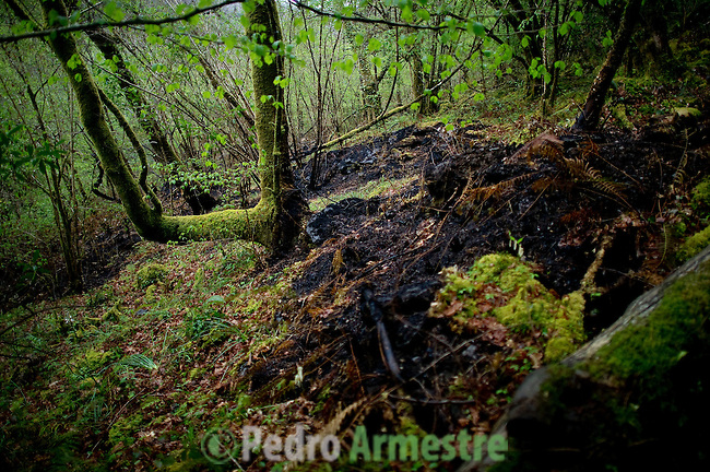 "An image of the Natural Park of ""Fragas do Eume"", near La Coruna, on April 09, 2012. On March 31 started a wildfire in the park that has ravaged 750 hectares according to government reports. . The Natural Park of ""Fragas do Eume"" is one of the most impressive deciduous forests across Europe, an example of endangered native forest. In the canyon formed by the river Eume, agglutinates a habitat that represents one of the last examples of Atlantic forest left in Europe. It inhabits a specially protected and endemic wildlife in an ecological enclave characterized by the presence of native plant species, some listed as very rare and very vulnerable. (c) Pedro ARMESTRE"