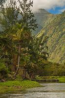 A peaceful pause near palm trees along the Waipi'o Valley Stream on the Big Island of Hawai'i.