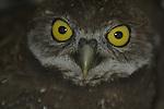 Owls_FL
