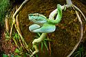 Borneo: Reptiles
