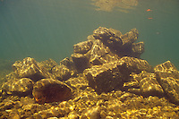 Underwater Scene (Rock pile on on river bottom)<br />