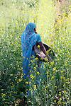 Woman in Blue Sari in Mustard Field Near Udaipur
