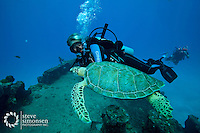 The Suffolk Maid tug boat, Butler Bay, .St. Croix, USVI  .Dive master Shannon Johnson with a green sea turtle