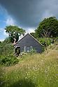 Garden study, Fairlight End, Pett, East Sussex, late June.