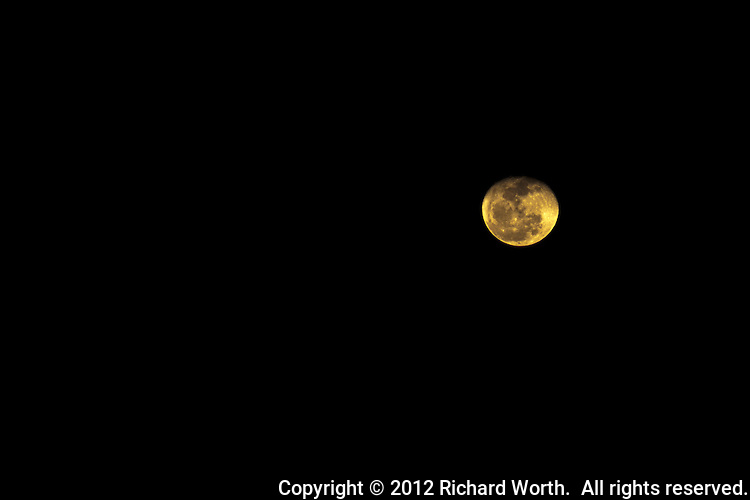 Shortly after rising, the gibbous moon appears yellow, its light filtered and colored by earth's atmosphere.