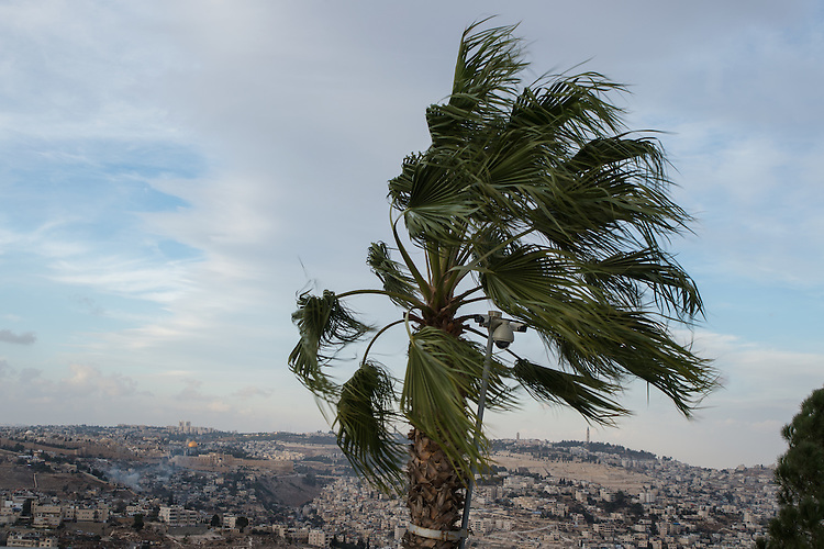 A security camera is attached to a palm tree in a promenade overlooking east Jerusalem.