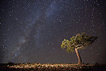 Lone pinyon pine beneath the Milky Way at Marble Point (single exposure, tree lit with flashlight)