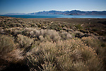 Pyramid Lake is the home of the large Lahontan cutthroat trout, near Sutcliffe, Nevada, April 18, 2013.