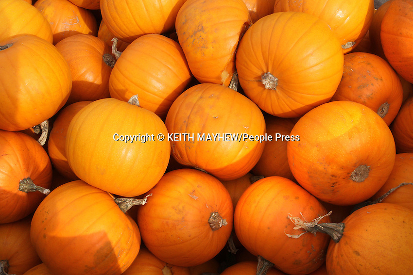 Bedfordshire, UK - Getting ready for Halloween - Pumpkins on sale in rural farmshops in Bedfordshire as well as a variety of Terracotta Halloween themed figures. October 20th 2012..Photo by Keith Mayhew