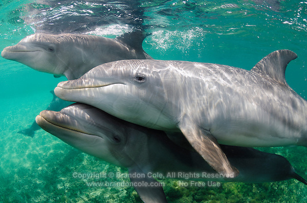 Bottlenose Dolphin Facts for Kids  Dolphin Photos