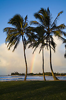 Rainbow over Puaena Point as seen through palm trees from Alii Beach Park in Haleiwa