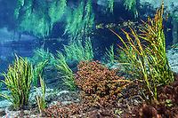 Underwater Scene of the Florida Springs<br />