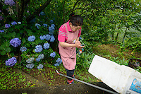 Farmer Yukiyo Nishkage checks an order for leaves on her cellphone, Kamikatsu, Katsuura, Tokushima Prefecture, Japan, July 7, 2014. The Irodori Project is based in the mountain town of Kamikatsu, Tokushima Prefecture. Farmers - many of them elderly - grow leaves and flowers to use to decorate Japanese food in restaurants and hotels across the nation.