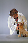 puppy with vet,