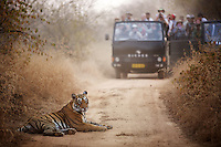 TIGER RELOCATION IN RAJASTHAN