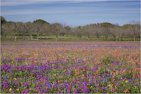 Sometimes Church Road near New Berlin, Texas, can offer amazing sights in Spring. In 2014, wildflowers were abundant in this, one of my favorite fields for bluebonnets and other Texas Wildflowers.
