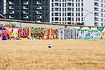 The photograph of a pigeon walking along the lawn at the East Side Gallery.