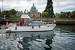 Vintage 50s Chris Craft cabin cruiser sets off out of Victoria B.C. harbor at the end of their wooden boat festival during Labor Day weekend. The classic Parliament building is in the background.
