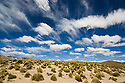 Bolivia, Altiplano, storm clouds above Altiplano grassland
