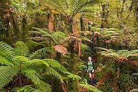 Female tramper on track in rainforest under tree ferns, Westland Tai Poutini National Park, West Coast, World Heritage Area, New Zealand MR