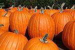 Bright pumpkins at farm stand