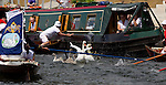 Mcc0024313 . Daily Telegraph<br /> <br /> Swan Upping on the river Thames between Shepperton Lock and Windsor. In the third week of July each year Swan Uppers travelling in six wooden Skiffs travel the 79 miles of the River Thames to count, weigh and check the health of Swans and their cygnets. <br /> <br /> The River Thames 19 July 2010<br /> <br /> <br /> <br /> <br /> <br /> <br /> <br /> <br /> <br /> <br /> <br /> Not Getty<br /> Not Reuters<br /> Not AP<br /> Not Reuters<br /> Not PA