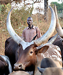 Cattle being herded along a road in Southern Sudan...
