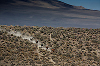 Wild horses run across dry rangeland in the Nevada desert. Draught and wild land fire put more pressure on mustangs.<br /> <br /> Cattor Livestock Roundup Inc out of Nephi, Utah rounded up 900 the horses that were shipped to Palomino Valley.  <br /> Under the stress of malnutrition, dehydration and the changes in their environment and diet, some of the horses contracted salmonella, which complicated recovery efforts. Eventually 159 horses died, though others recovered from the sickness, and some never contracted the illness at all.