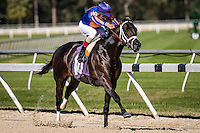 OLDSMAR, FLORIDA - FEBRUARY 11: Egyptian Hero #10, ridden by John R. Velazquez (blue hat), coming down the final stretch, and wins the Palm Harbor II Lions Club race at Tampa Bay Downs on February 11, 2017 in Oldsmar, Florida (photo by Douglas DeFelice/Eclipse Sportswire/Getty Images)