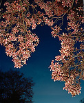 Spring flowers at twilight in New Jersey
