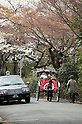 April 10, 2012, Kyoto, Japan - A traditional transport in Japan is this cart, pulled by a man while having a taxi to his right side. Hanami is one of the oldest traditions in Japan, which is to admire the cherry blossoms. Last year this tradition was interrupted in the northeast of Japan, because of the big earthquake and tsunami of March 11, 2011.